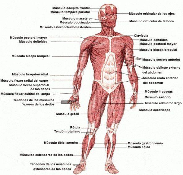 Enfermería Blog Anatomía